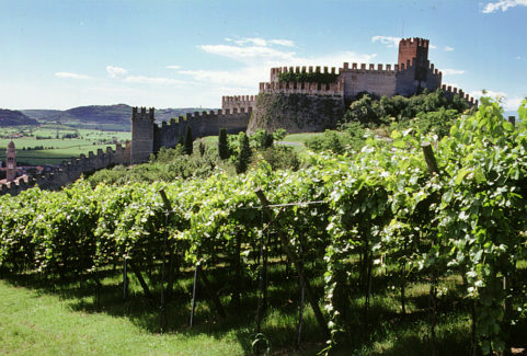Self-Driving tour among the vineyards of Veneto